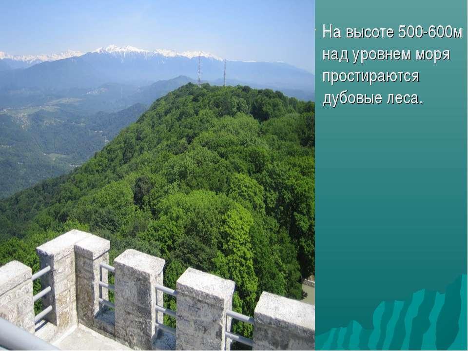 На высоте 500-600м над уровнем моря простираются дубовые леса.
