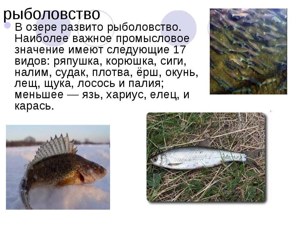 рыболовство В озере развито рыболовство. Наиболее важное промысловое значение...