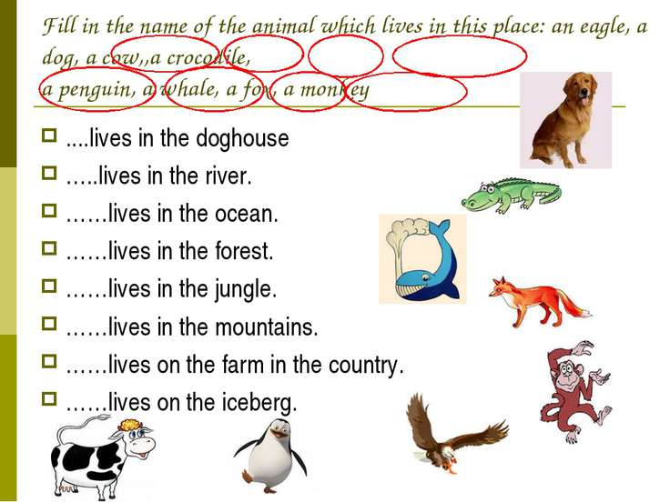 Fill in the name of the animal which lives in this place: an eagle, a dog, a ...