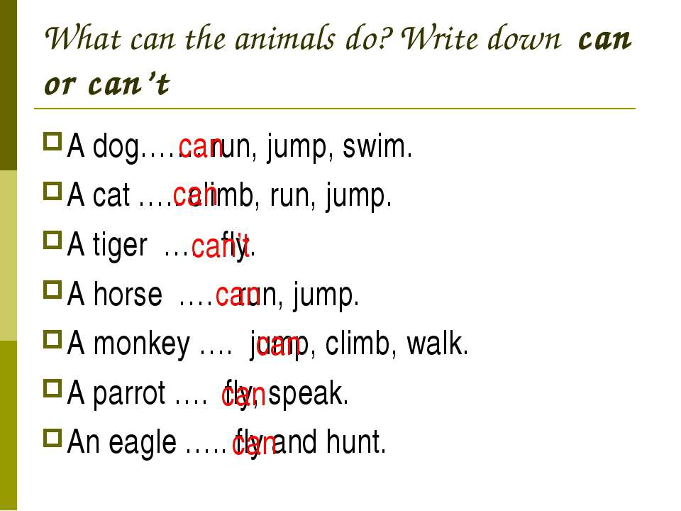 What can the animals do? Write down can or can't A dog……. run, jump, swim. A ...