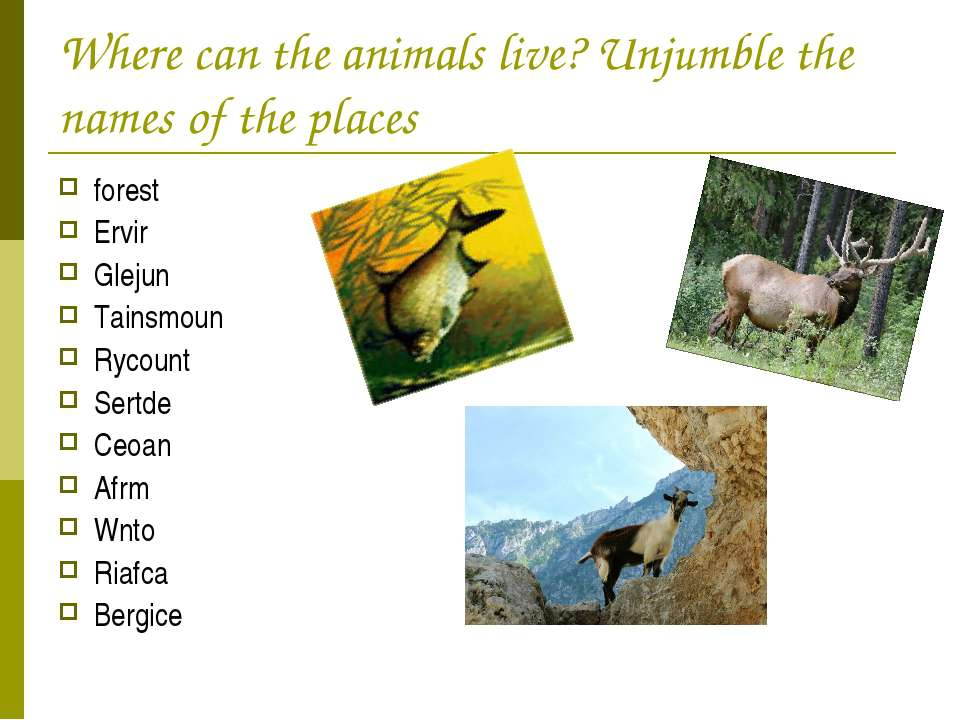 Where can the animals live? Unjumble the names of the places forest Ervir Gle...