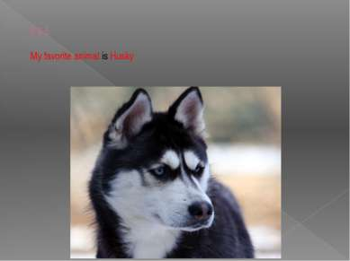 ♥♥♥ My favorite animal is Husky