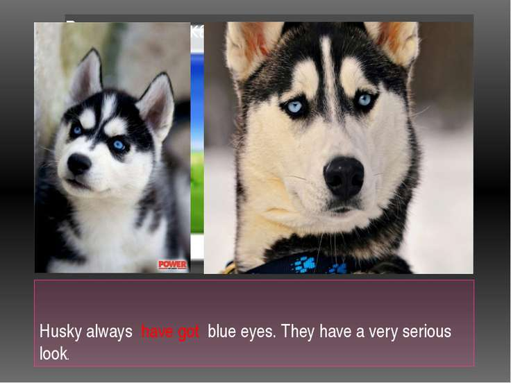 Husky always have got blue eyes. They have a very serious look.
