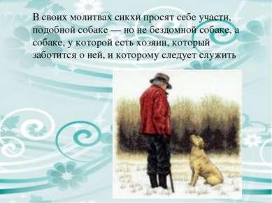 В своих молитвах сикхи просят себе участи, подобной собаке — но не бездомной ...