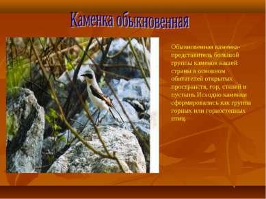 Обыкновенная каменка-представитель большой группы каменок нашей страны в осно...
