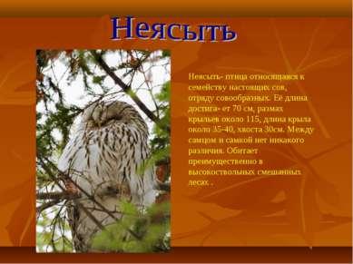 Неясыть- птица относящаяся к семейству настоящих сов, отряду совообразных. Её...