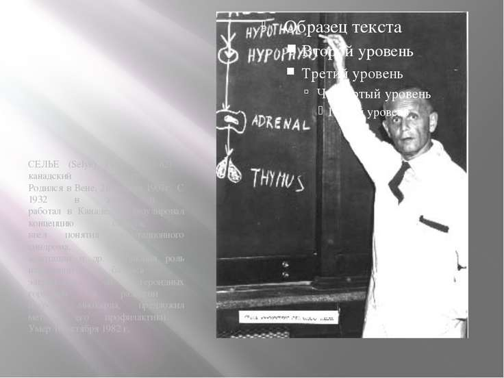 СЕЛЬЕ (Selye) Ганс (1907-82) - канадский патолог. Родился в Вене, 26 января ...