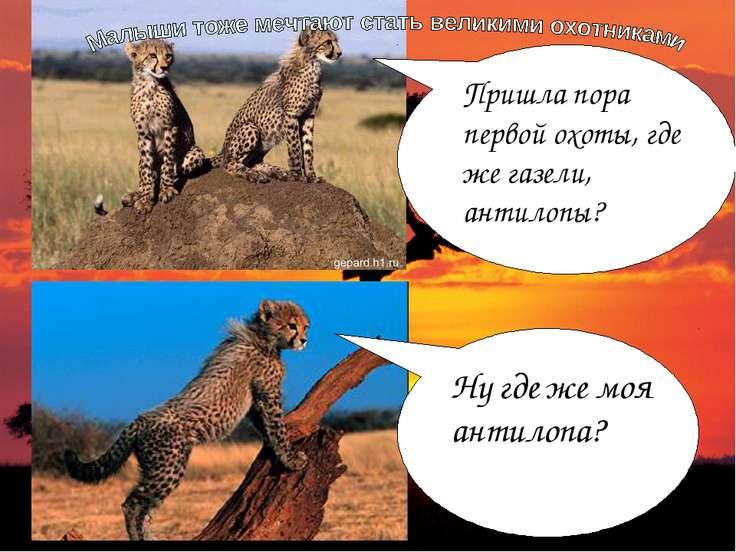 Пришла пора первой охоты, где же газели, антилопы? Ну где же моя антилопа?