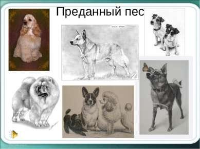 Преданный пес