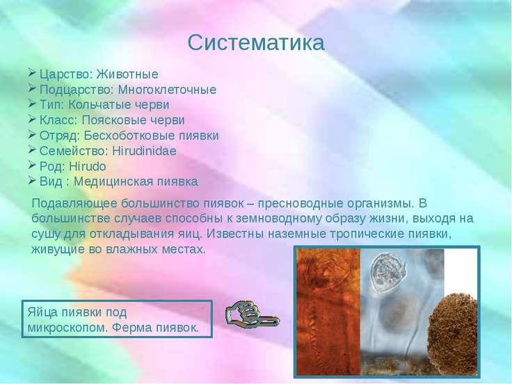 Систематика Царство: Животные Подцарство: Многоклеточные Тип: Кольчатые черви...