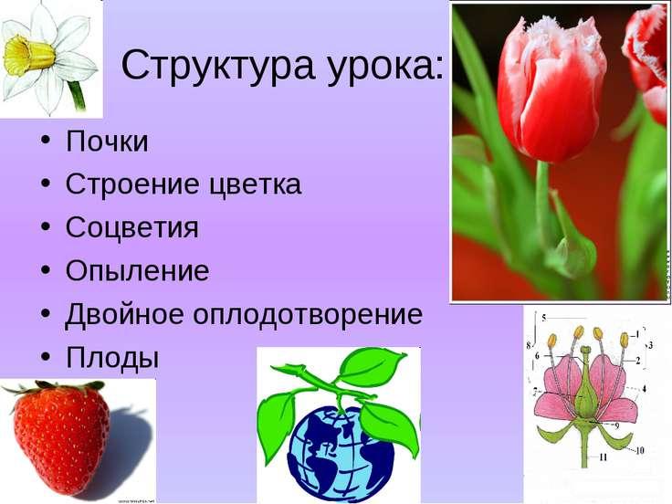 Структура урока: Почки Строение цветка Соцветия Опыление Двойное оплодотворен...