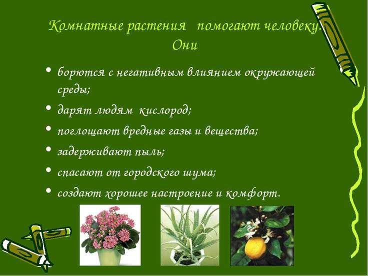 Комнатные растения помогают человеку. Они борются с негативным влиянием окруж...