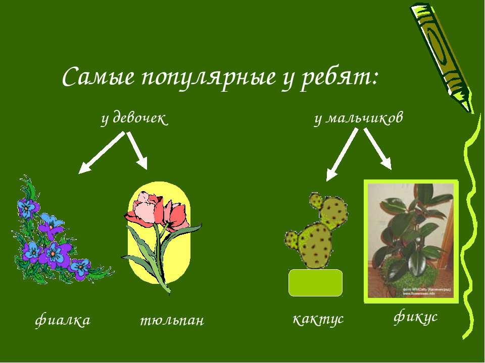 Самые популярные у ребят: у девочек у мальчиков фикус кактус тюльпан фиалка