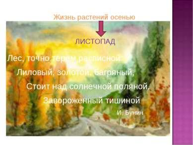 Жизнь растений осенью ЛИСТОПАД Лес, точно терем расписной: Лиловый, золотой, ...