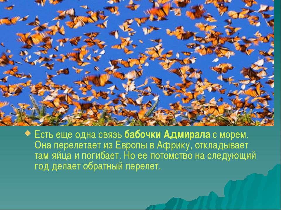 Есть еще одна связьбабочки Адмиралас морем. Она перелетает из Евр...