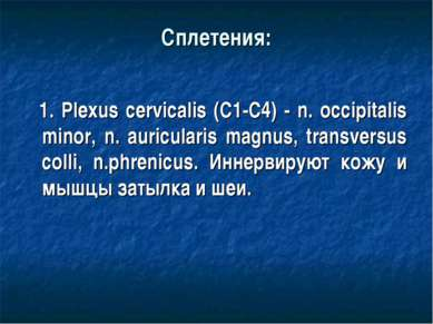 Сплетения: 1. Plexus cervicalis (C1-C4) - n. occipitalis minor, n. auriculari...