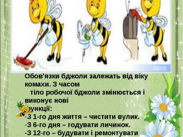 Обов'язки бджоли залежать від віку комахи. З часом тіло робочої бджоли змінює...