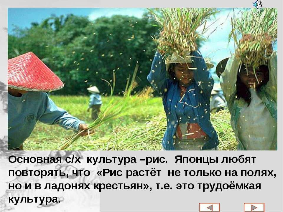Основная с/х культура –рис. Японцы любят повторять, что «Рис растёт не только...