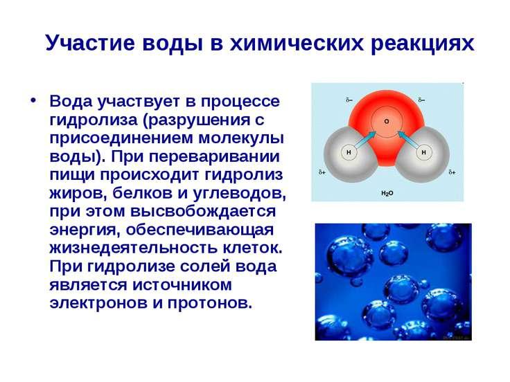 Вода участвует в процессе гидролиза (разрушения с присоединением молекулы вод...
