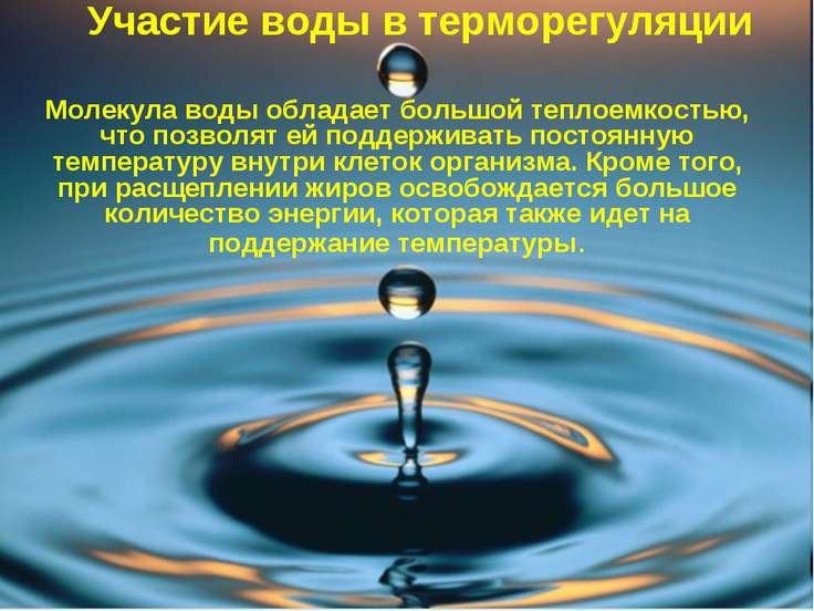 Участие воды в терморегуляции Молекула воды обладает большой теплоемкостью, ч...