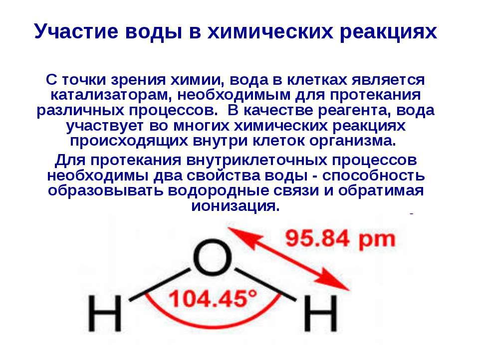 Участие воды в химических реакциях С точки зрения химии, вода в клетках являе...