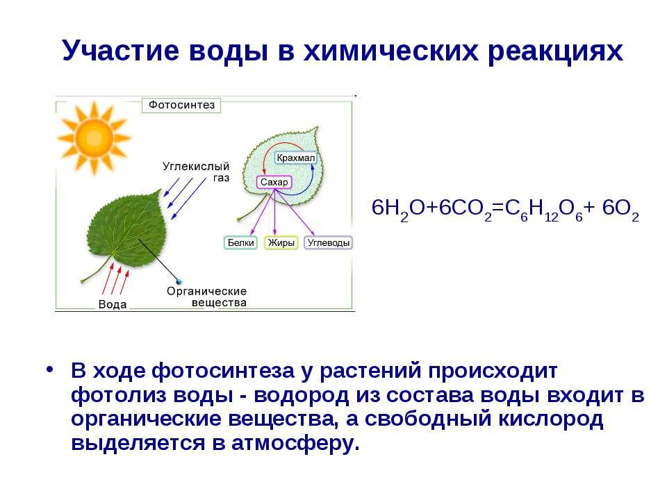 В ходе фотосинтеза у растений происходит фотолиз воды - водород из состава во...
