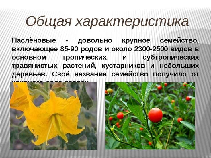 Общая характеристика Паслёновые - довольно крупное семейство, включающее 85-9...