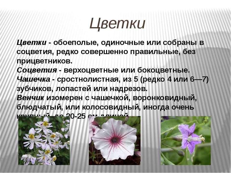 Цветки Цветки - обоеполые, одиночные или собраны в соцветия, редко совершенно...