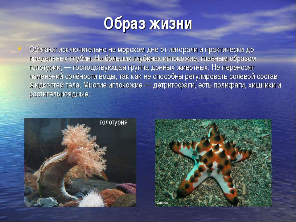 Образ жизни Обитают исключительно на морском дне от литорали и практически до...