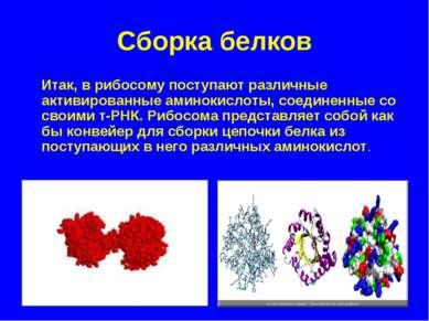 Сборка белков Итак, в рибосому поступают различные активированные аминокислот...