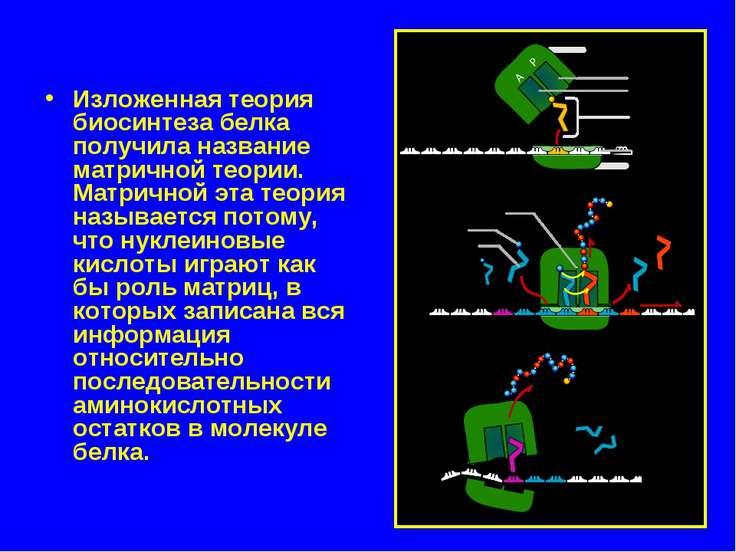 Изложенная теория биосинтеза белка получила название матричной теории. Матрич...