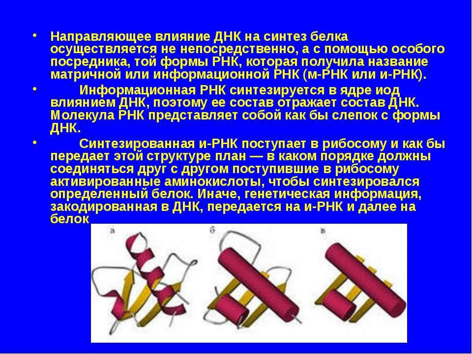 Направляющее влияние ДНК на синтез белка осуществляется не непосредственно, а...