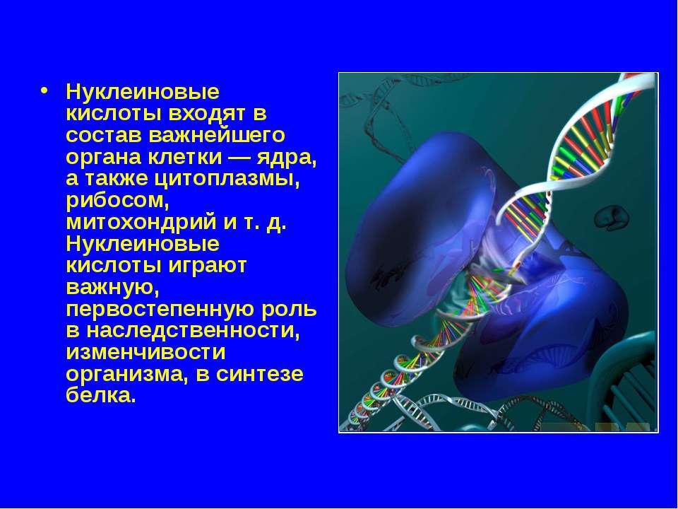 Нуклеиновые кислоты входят в состав важнейшего органа клетки — ядра, а также ...