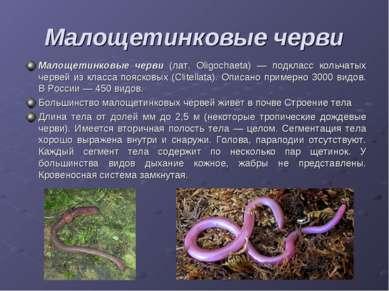 Малощетинковые черви Малощетинковые черви (лат. Oligochaeta) — подкласс кольч...