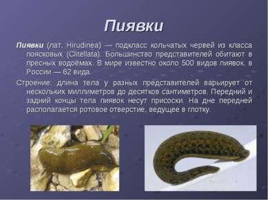 Пиявки Пиявки (лат. Hirudinea) — подкласс кольчатых червей из класса поясковы...