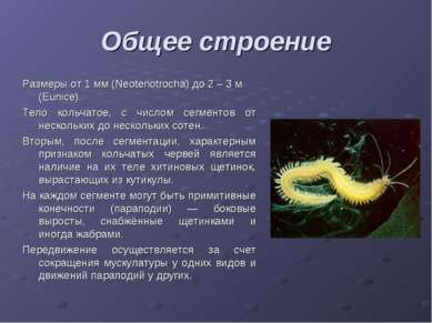 Общее строение Размеры от 1 мм (Neotenotrocha) до 2 – 3 м (Eunice). Тело коль...