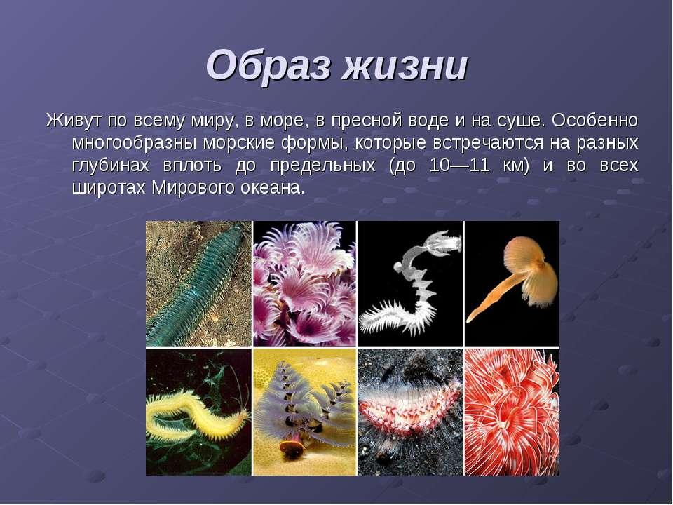 Образ жизни Живут по всему миру, в море, в пресной воде и на суше. Особенно м...