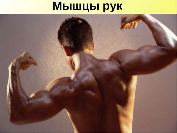 Мышцы рук