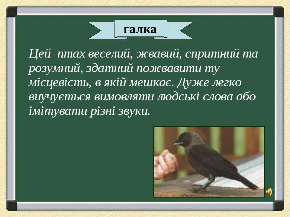 Цей птах веселий, жвавий, спритний та розумний, здатний пожвавити ту місцевіс...