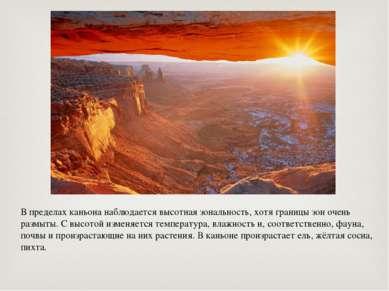 В пределах каньона наблюдается высотная зональность, хотя границы зон очень р...