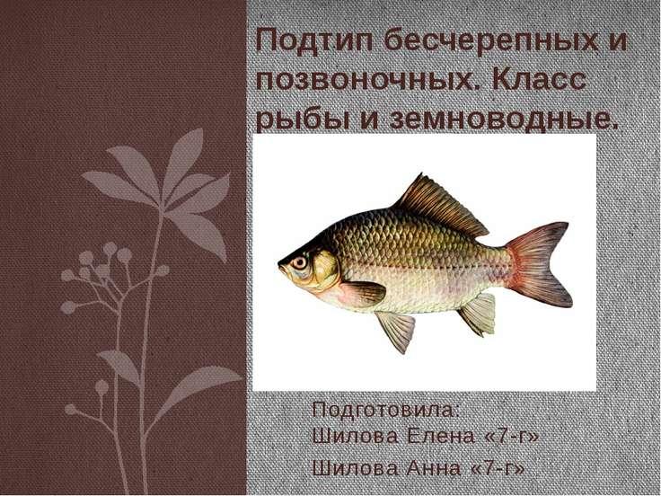 Подготовила: Шилова Елена «7-г» Шилова Анна «7-г» Подтип бесчерепных и позвон...