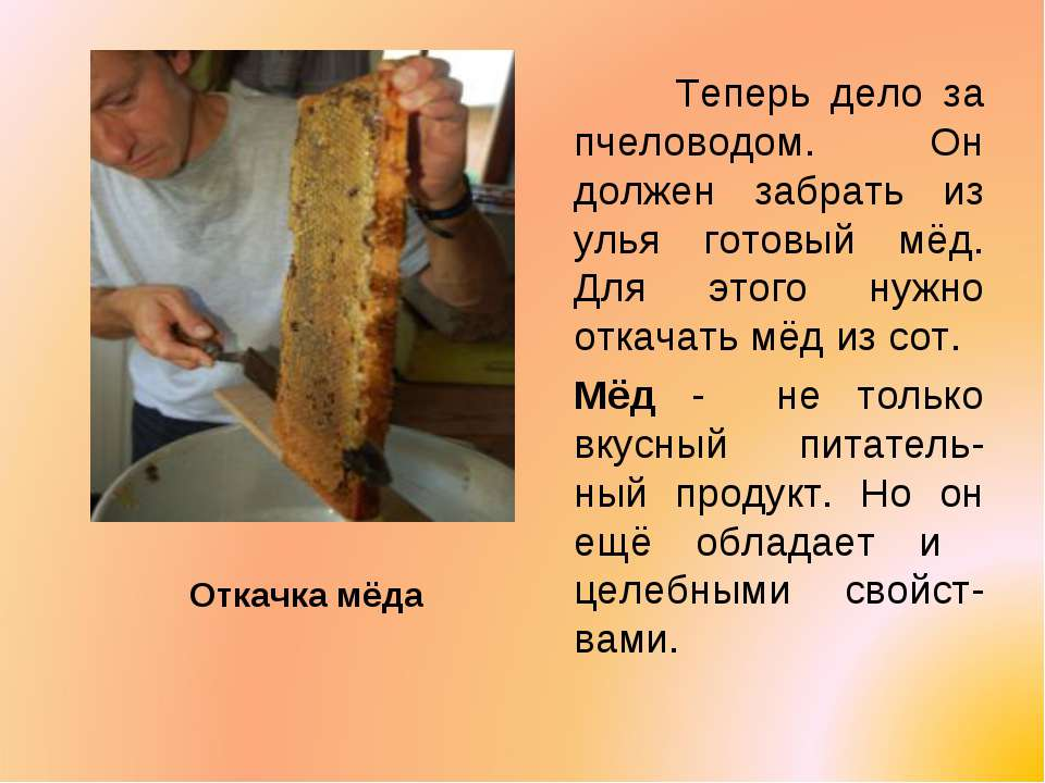 Откачка мёда Теперь дело за пчеловодом. Он должен забрать из улья готовый мёд...