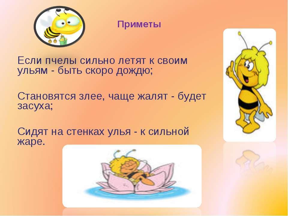 Приметы Если пчелы сильно летят к своим ульям - быть скоро дождю; Становятся ...