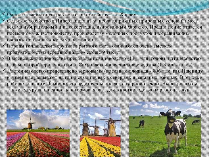 Один из главных центров сельского хозяйства ‒ г. Харлем Сельское хозяйство в ...