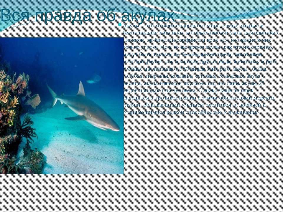 Вся правда об акулах Акулы – это хозяева подводного мира, самые хитрые и бесп...