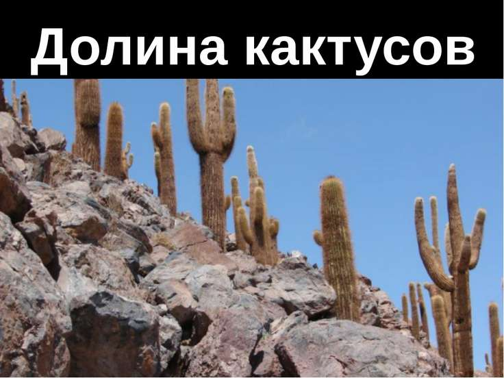 Долина кактусов