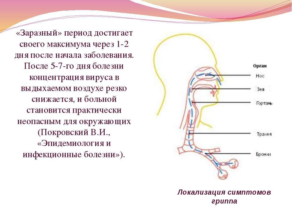 Локализация симптомов гриппа «Заразный» период достигает своего максимума чер...