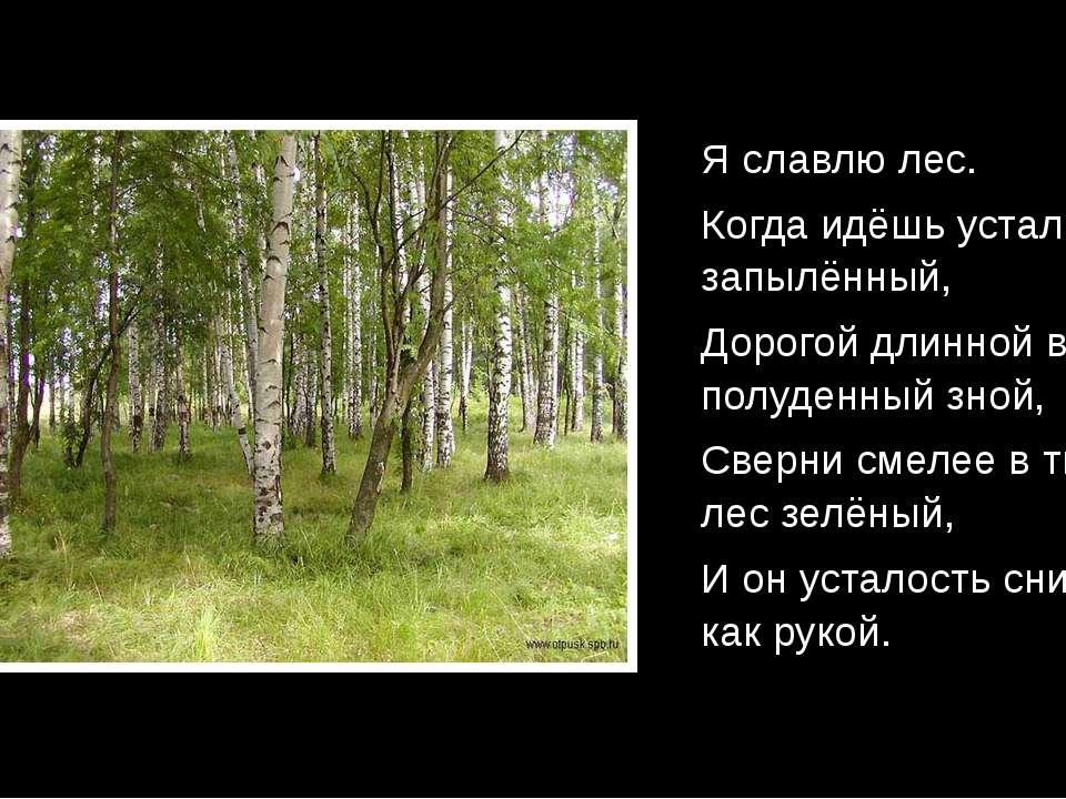Я славлю лес. Когда идёшь усталый, запылённый, Дорогой длинной в полуденный з...