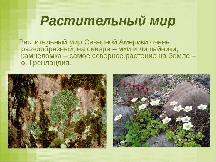 Растительный мир Растительный мир Северной Америки очень разнообразный, на се...