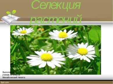 Селекция растений Выполнил ученик 10 класса Михайловский Никита